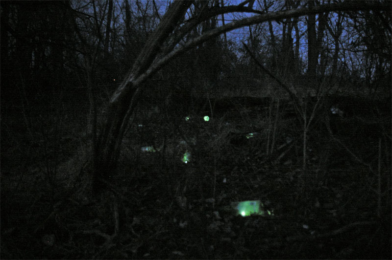 glowing green bottles in a twighlit forest.